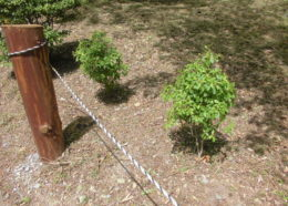 下草刈り・雑木伐採キャンペーンについて